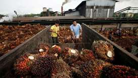 Workers unload oil palm fruits in a state-owned crude palm oil processing unit in North Sumatra