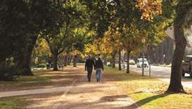 Money trees: US cities find new ways of valuing urban forests