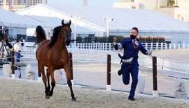 Day 1 of the Katara International Arabian Horse Festival — Title Show. PICTURES: Jayan Orma