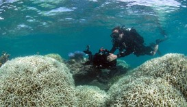 Scientists alarmed at new Great Barrier Reef coral bleaching