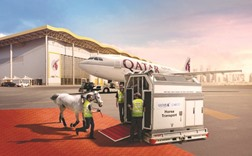 Qatar Airways flies 118 horses for CHI Al Shaqab