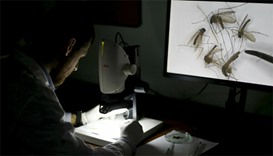 A worker uses an electronic microscope to observe mosquitoes