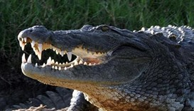 Philippine boy eaten by crocodile in latest attack