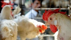 Saudi Arabia temporarily bans poultry imports from Tennessee