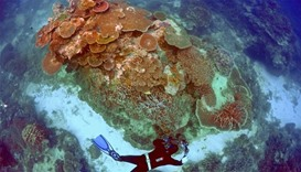 an inspection of the reef's condition in an area called the 'Coral Gardens' located at Lady Elliot I