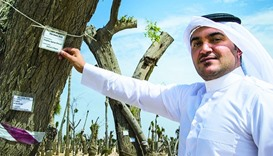 Thousands of trees to get a new life at 2022 FIFA World Cup Qatar sites