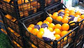 Egyptian oranges dress up as Turkish: MEC registers violation