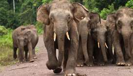 Elephant poachers arrested in Malaysia
