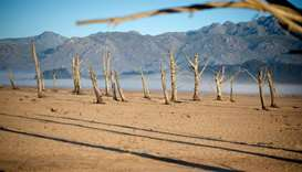 Bare sand and dried tree trunks standing out at Theewaterskloof Dam
