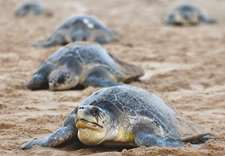 Turtle warriors on mission to save threatened species