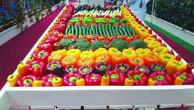 A colourful display of fresh local vegetables at AgriteQ 2019. PICTURE: Joey Aguilar