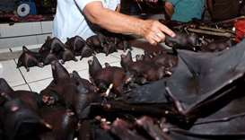 A vendor selling bats at the Tomohon Extreme Meat market on Sulawesi Island, where bats, rats and sn