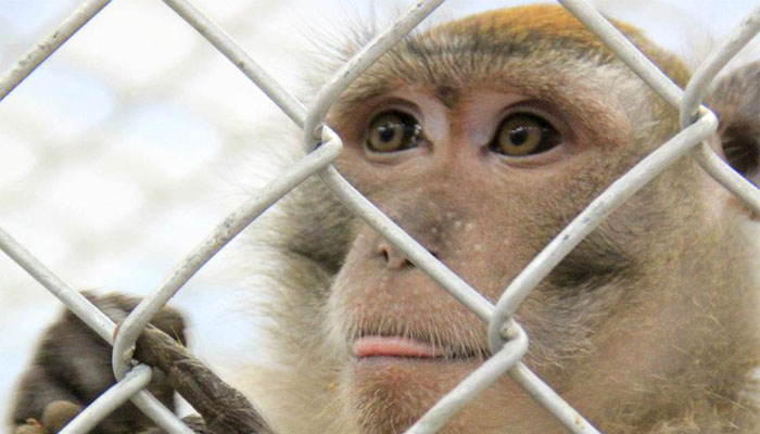 Philippines suspends monkey exports after Ebola deaths