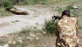 Activists decry Nairobi road project after two lions killed