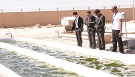 QU currently operates an algae testing plant in Al Khor for its Algal Technologies Programme.