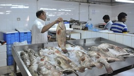 Fish prices shoot up as shortage looms