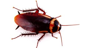 Demand for pest control surges as cockroaches multiply