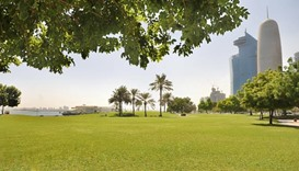 Qatar looks for best grass for 2022 World Cup