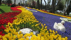 Istanbul tulip festival quiet but colourful as ever