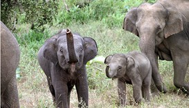Sri Lanka stops elephant flying to New Zealand