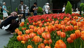 Visitors take photograph of flowers at Tulipmania floral display in the flower dome at Garden by the