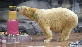 Singapore Zoo's last polar bear put down on 'humane grounds'