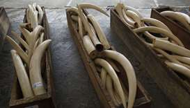 China - smuggled tusks