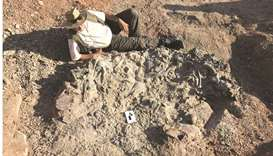 Dinosaur cemetery unearthed in Argentina
