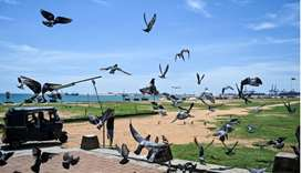A Sri Lankan man drives a three-wheel taxi as pigeons take a flight in Colombo