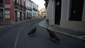 Two peacocks walk down a street in Ronda on April 3, 2020 during a national lockdown to prevent the