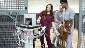 Dr Melissa Fenn, internal medicine specialist at EVMC, performing an ultrasound on a sick foal and e