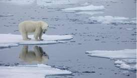 Polar Bears International shows a polar bear standing on melting sea ice in Svalbard, Norway, in 201