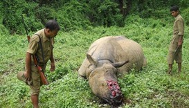 Indian police arrest forest guards over rhino poaching