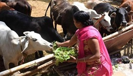 Indian mob kills two Muslims over suspected cow theft