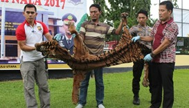 Indonesian police displaying a tiger skin in Argamakmur, North Bengkulu
