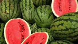 Jordanian watermelons safe, says ministry