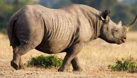 Poachers shoot dead three rhinos inside Kenyan sanctuary