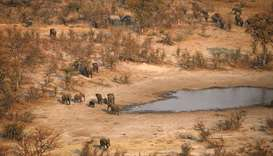 Conservationists condemn lifting of Botswana hunting ban