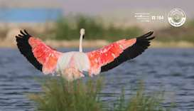 Qatar is bird 'stopover' site for about 300 species