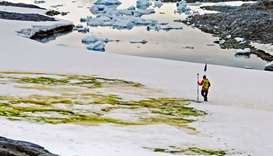 Andrew Gray geo-tagging snow algae blooms on Anchorage Island, in Antarctica