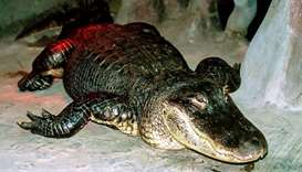 Alligator that survived Berlin WWII bombing dies at 84