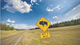 This file photo shows a sign warning of an American bison, also called buffalo, crossing near the No