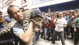 Leopard on loose sparks alarm in Nepalese capital