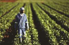 South Africa to target Asian maize buyers as African supply jumps