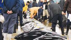 Fishmongers checking bluefin tuna prior to the new year's first auction at the Tsukiji fish market i