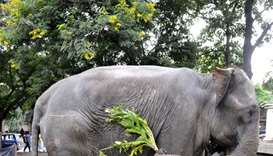 Elephant tramples four to death in southern India