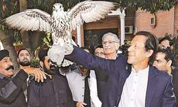 Thousands of falcons smuggled out of Pakistan every year
