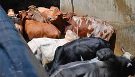 India's meat exporters take hit amid cow protection drive