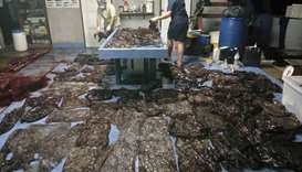 Up to 80 plastic bags extracted from within a whale are seen in Songkhla, Thailand