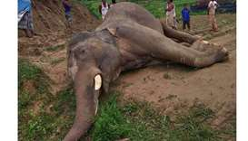 Locals gather around the body of an elephant allegedly died by electricity wires in Teknaf
